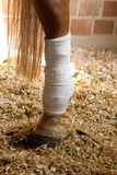 Connected horses leg. With a bandage royalty free stock photography