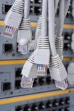 Connecteurs du câble RJ45 de corde de correction de réseau photo stock