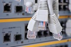 Connecteurs du câble RJ45 de corde de correction de réseau images libres de droits