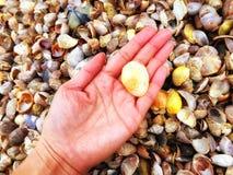 Connecticut Beach Sea Shells Stock Photos