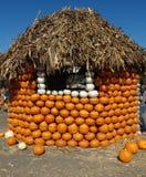 Connecticut Field pumpkin hut, Cucurbita pepo Stock Photo