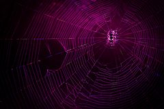 Connection concept of spider web back-lighted by led lights. stock images