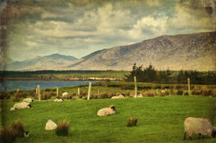 Connemara del paisaje de Grunge, Irlanda del oeste Imagen de archivo