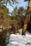 Connetquot河国家公园, Oakdale,纽约 免版税图库摄影