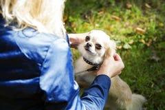 Connexion entre le chien et son propriétaire Photographie stock