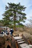 The connexion pine tree and bridge Royalty Free Stock Image