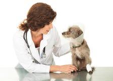 Cono d'uso danneggiato del cane con il veterinario Fotografia Stock