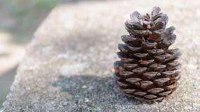 Cono de abeto de Brown sin las semillas en la piedra fotos de archivo