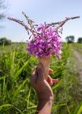 Cono de helado con las flores brillantes, rosadas en su mano en el fondo del campo y el camino imagen de archivo