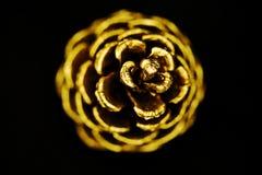 Cono de oro del pino Fotografía de archivo libre de regalías