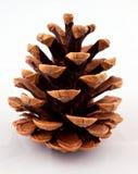 Cono del pino Fotografie Stock
