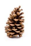 Cono del pino Imagen de archivo