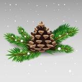 Cono del pino Fotos de archivo libres de regalías