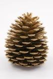 Cono del pino. Imagen de archivo libre de regalías
