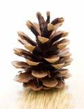 Cono del pino Foto de archivo