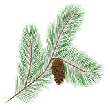 Cono del pino con gli aghi del pino Immagine Stock
