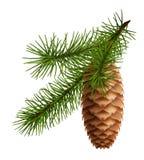 Cono del pino con la filiale Immagini Stock Libere da Diritti