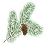 Cono del pino con las agujas del pino Imagen de archivo
