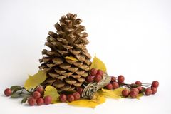 Cono del pino con las bayas Imagen de archivo libre de regalías