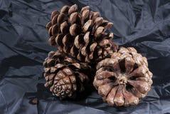 Cono del pino de Brown con el paño negro foto de archivo