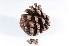 Cono del pino de Brown con las nueces de pino imagenes de archivo