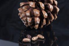 Cono del pino de Brown con negro brillante del paño negro aislado fotos de archivo