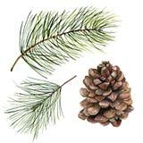 Cono del pino de la acuarela y sistema de la rama del abeto Rama pintada a mano del pino con el cono aislado en el fondo blanco C stock de ilustración