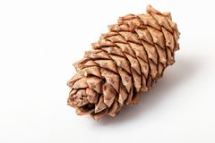 Cono del pino del cedro Imagenes de archivo