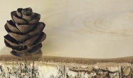 Cono del pino en el tablero de madera del abedul con cierre de la corteza para arriba Imagen de archivo libre de regalías