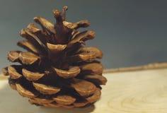 Cono del pino en el tablero de madera del abedul con cierre de la corteza para arriba Fotos de archivo libres de regalías
