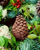 Cono del pino en el verde - fondo de la Navidad Imagen de archivo