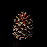 Cono del pino en la decoración negra de la Navidad del fondo Fotos de archivo