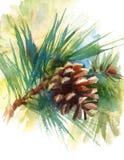 Cono del pino en la mano del ejemplo de la acuarela de la rama dibujada