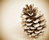 Cono del pino en la nieve Fotografía de archivo libre de regalías