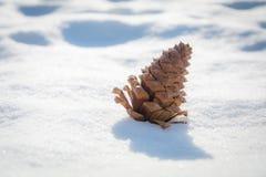 Cono del pino en la nieve Imagen de archivo libre de regalías