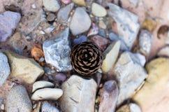 Cono del pino en Rock Creek colorido Foto de archivo libre de regalías