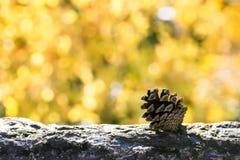 Cono del pino en un tocón de árbol con el fondo amarillo del bokeh Fotografía de archivo