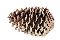 Cono del pino isolato Fotografia Stock
