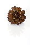 Cono del pino isolato sopra bianco Fotografia Stock Libera da Diritti