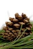 Cono del pino isolato sopra bianco Fotografie Stock Libere da Diritti