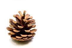 Cono del pino isolato su bianco Immagine Stock Libera da Diritti