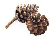 Cono del pino isolato su priorità bassa bianca fotografie stock
