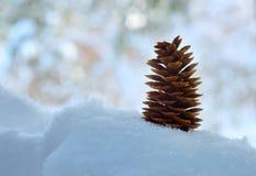 Cono del pino in neve Immagini Stock