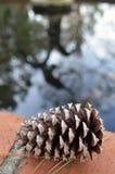 Cono del pino por una charca Foto de archivo libre de regalías