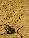 Cono del pino su terra arida Fotografia Stock Libera da Diritti