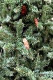 Cono del pino un árbol de navidad Fotografía de archivo libre de regalías