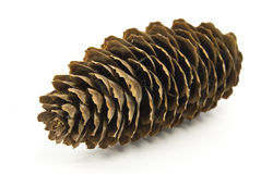 Cono del pino una fine sul colpo. Fotografia Stock Libera da Diritti