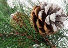 Cono del pino y agujas del pino Foto de archivo libre de regalías