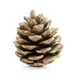 Cono dell'abete del pino isolato su bianco Fotografia Stock Libera da Diritti