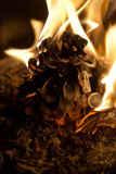 Cono di abete bruciante Fotografia Stock Libera da Diritti